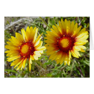 F0008 Yellow Wildflowers Gaillardia Greeting Card