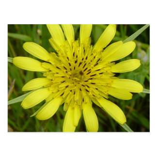 F0009 Yellow wildflower two Postcard