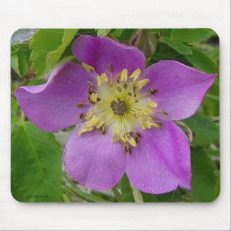 F0013 Prickly Rose/Alberta Wild Rose mouse pad