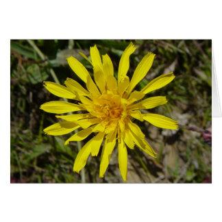 F0021 Yellow Wildflower Narrow-leaved Hawksbeard Greeting Card