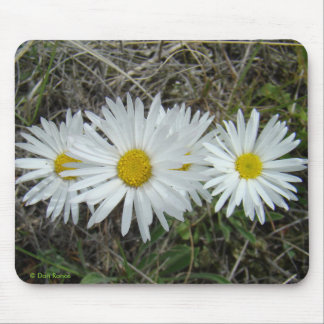 F0042 White Wildflowers Smooth Aster Mouse Pads