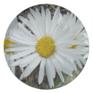 F0042 White Wildflowers Smooth Aster Dinner Plates
