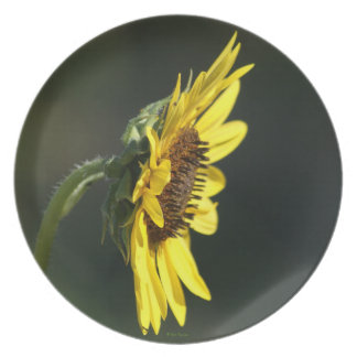 F0043 Yellow Wildflower Black-eyed Susan Plate