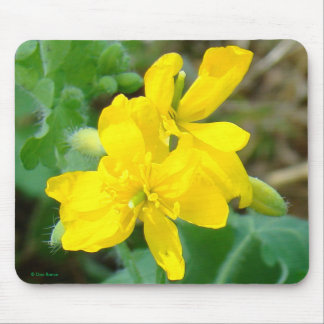 F0044 Yellow Wildflowers Wild Mustard Mouse Pads