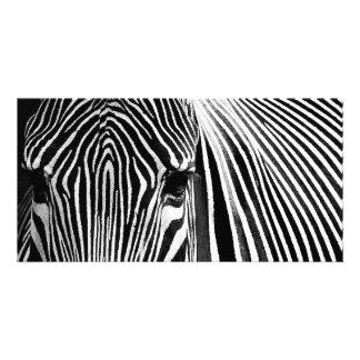 Face of a Zebra Photo Cards