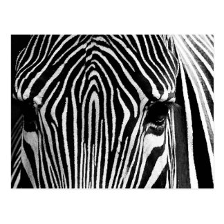 Face of a Zebra Postcard