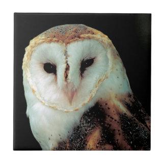 Face of Barn Owl Photo Ceramic Tile
