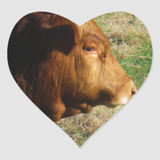 Face of Brown bull cow Heart Sticker