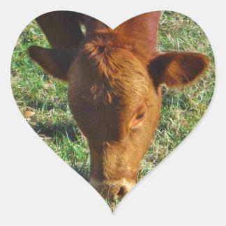 Face of Little Brown Cow Heart Sticker