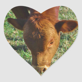 Face of Little Brown Cow Heart Stickers