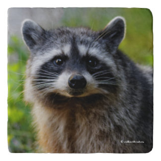 Face to Face with a North American Raccoon Trivet