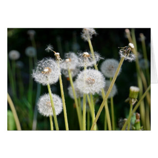 Faded dandelions card