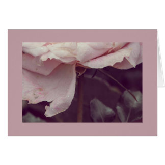 Faded pink rose card
