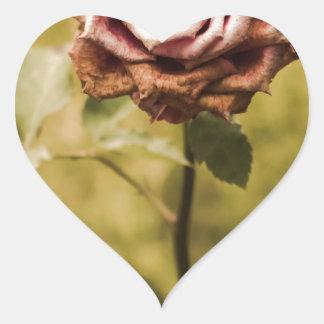 Faded pink rose in a garden heart sticker