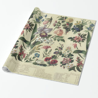 Faded Vintage Flower Botanicals Wrapping Paper