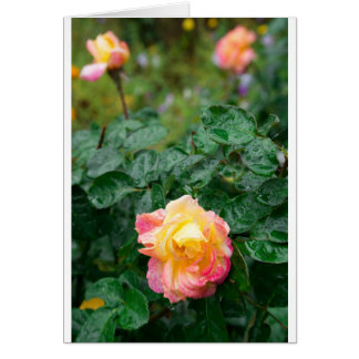 Fades wet autumn rose with blur card