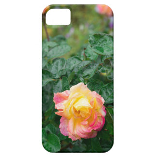 Fades wet autumn rose with blur iPhone 5 case