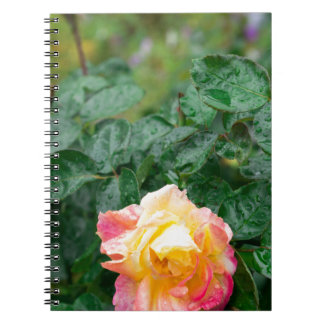 Fades wet autumn rose with blur notebook