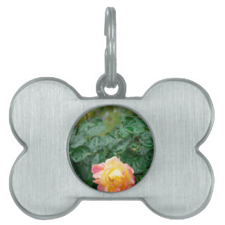Fades wet autumn rose with blur pet name tag