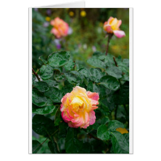 Fades wet rose with drops of  rain card
