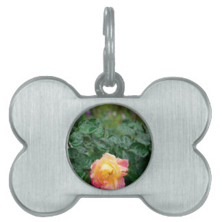 Fades wet rose with drops of  rain pet ID tag