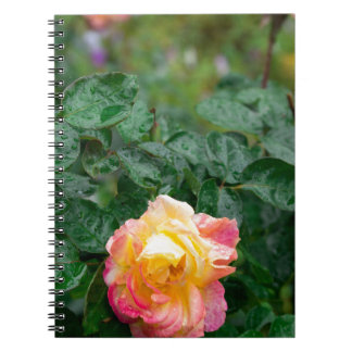 Fades wet rose with drops of  rain spiral notebook