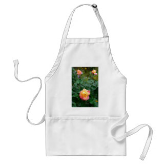Fades wet rose with drops of  rain standard apron