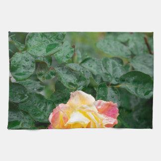 Fades wet rose with drops of  rain tea towel