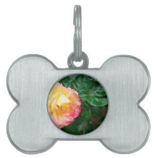 Fading autumn rose pet name tag