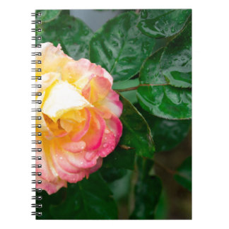 Fading autumn rose spiral notebook