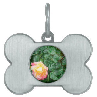 Fading autumn rose with droplets pet name tags