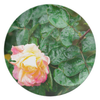 Fading autumn rose with droplets plate