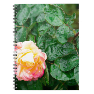 Fading autumn rose with droplets spiral notebook
