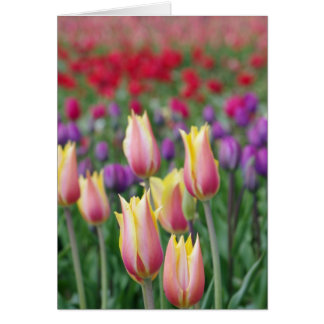Fading Tulips Card