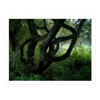 Fairy Tree Postcard