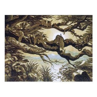 Fairyland: Asleep in the Moonlight Postcard