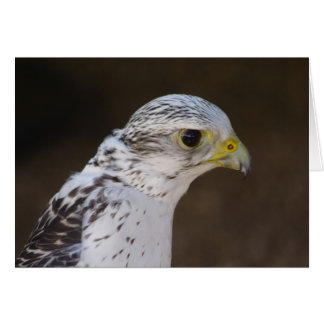 Falco rusticolus card