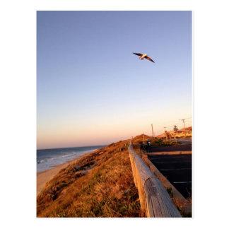 Falcon Beach Seagul Postcard