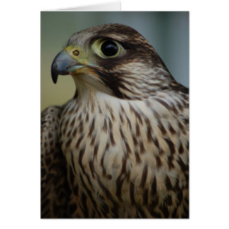 Falcon Head Card