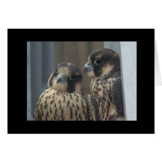 Falcon note card