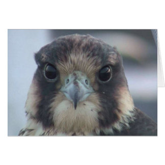 Falcon notecard