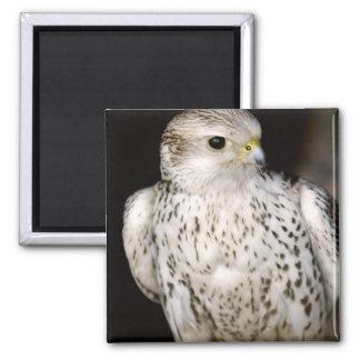 Falcon Square Magnet