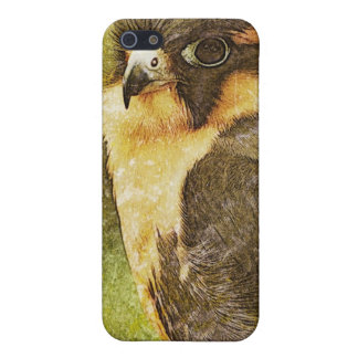 Falconry iPhone 5/5S Cover
