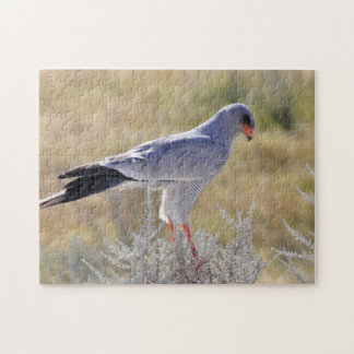 Falcons of Namibia. Jigsaw Puzzle
