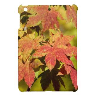 Fall 10 iPad mini covers