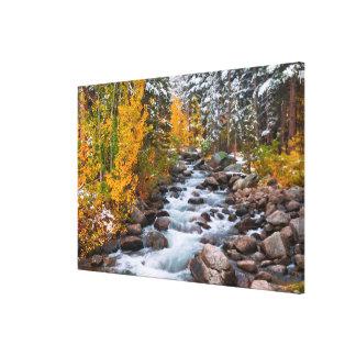 Fall along Bishop creek, California Canvas Print