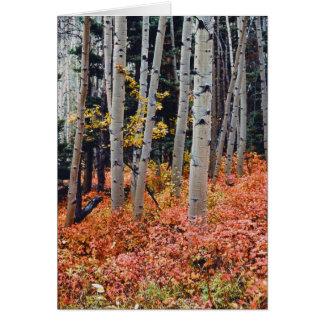 Fall Aspens Card