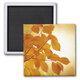 Fall Autumn Leaf Leaves Branches Park Tree Country Magnets