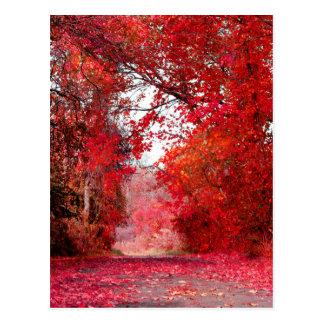 Fall Autumn Season Forest Park Shower Leaf Leaves Postcard