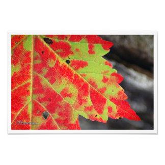 Fall Camouflage Photo Print